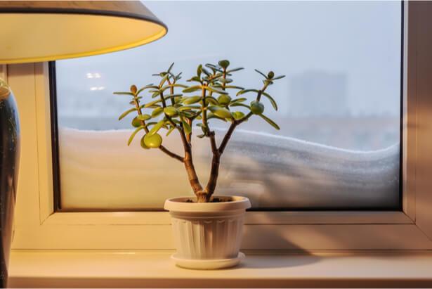 comment sauver une plante qui a eu froid
