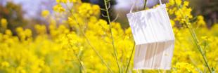 Le pollen et la pollution, des facteurs qui aggravent l'épidémie de Covid-19 ?
