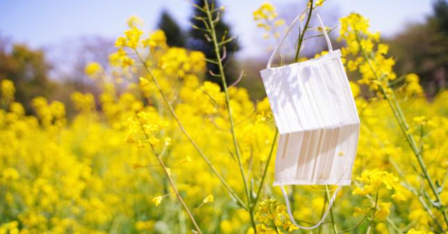 Le pollen et la pollution, des facteurs qui aggravent l'épidémie de Covid-19?