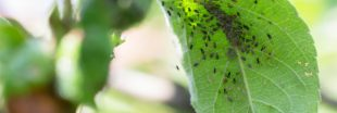Incroyable : les ravageurs de culture favorisent l'agriculture bio [1er avril]