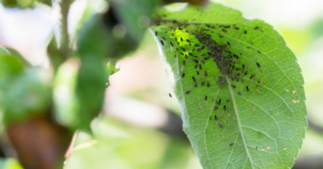 Incroyable: les ravageurs de culture favorisent l'agriculture bio [1er avril]