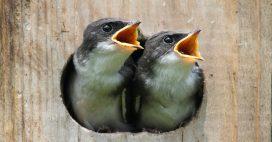 Créer un refuge LPO pour accueillir la biodiversité dans son jardin ou sur son balcon