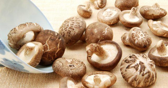 Le shiitaké, champignon élixir de longue vie