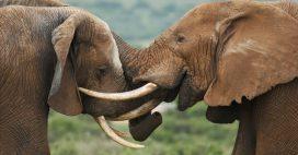 La France reste une plaque tournante du trafic d'espèces sauvages!