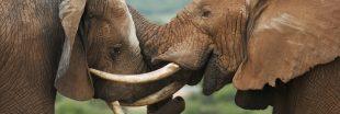 La France reste une plaque tournante du trafic d'espèces sauvages !