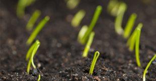 Tout savoir pour réussir vos semis d'oignon