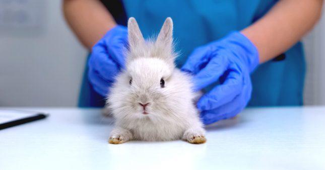 Adoption: sauvez un animal de laboratoire de l'euthanasie