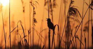 Ecouter les bruits de la nature peut aider votre santé