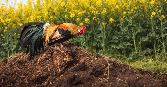 Les sols, mieux protégés des bactéries dangereuses avec un compost qu'avec des engrais chimiques
