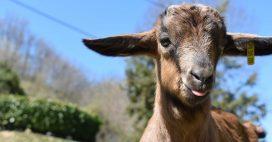 Crise sanitaire: les associations de protections des animaux en difficulté
