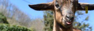 Crise sanitaire : les associations de protections des animaux en difficulté
