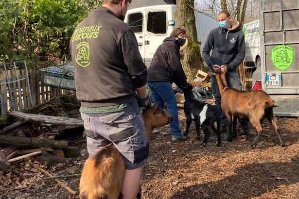 crise sanitaire associations de protection des animaux
