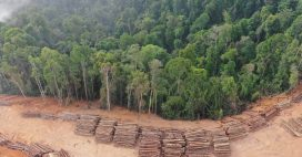 L'Europe est est le 2ème importateur de déforestation tropicale, derrière la Chine!