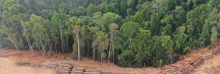 L'Europe est est le 2ème importateur de déforestation tropicale, derrière la Chine !