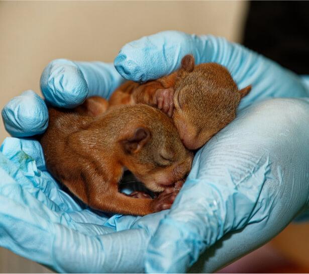 dons de noisettes écureuil