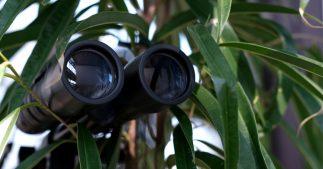 espionnage vert