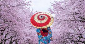 Floraison des cerisiers au Japon: un record vieux de 1200 ans a été battu