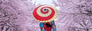 Floraison des cerisiers au Japon : un record vieux de 1200 ans a été battu