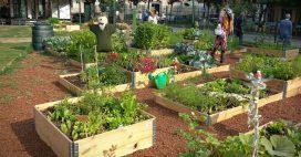 Jardins et développement durable – Un combo gagnant!