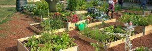 Jardins et développement durable - Un combo gagnant !
