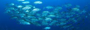 Réchauffement des océans : l'exode des poissons a commencé