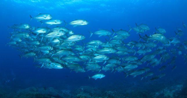 Réchauffement des océans: l'exode des poissons a commencé