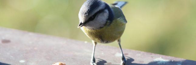 oiseaux rendent heureux