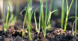 Tout savoir pour réussir vos semis de poireaux