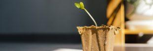 Tout savoir pour réussir vos semis de cucurbitacées
