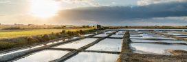 L'éco-tourisme en Vendée