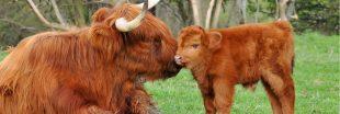Opération adopt1veau pour sauver les tourbières en Occitanie
