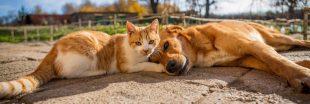 Attention les antiparasitaires pour chiens sont très dangereux pour les chats !