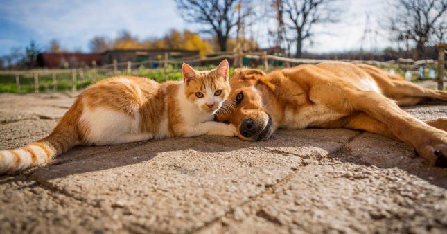 Attention les antiparasitaires pour chiens sont très dangereux pour les chats!