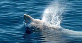 Hallucinant: 16 kg de plastique dans l'estomac d'une baleine échouée dans les Landes