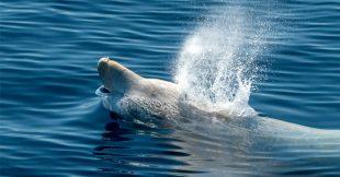 Hallucinant : 16 kg de plastique dans l'estomac d'une baleine échouée dans les Landes