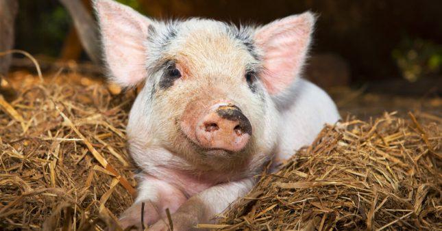 Les mammifères peuvent respirer par l'anus, et c'est une bonne nouvelle pour les humains