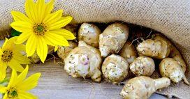 Légumes oubliés: que faut-il savoir sur l'héliantis?