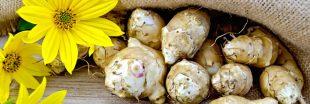 Légumes oubliés : que faut-il savoir sur l'héliantis ?