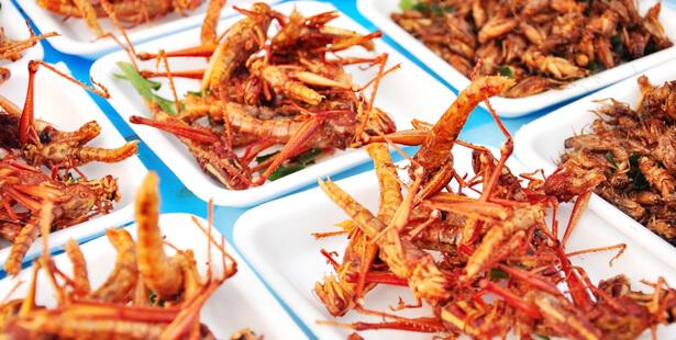 insectes comestibles france