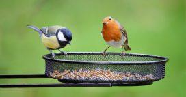 Les oiseaux de nos jardins, aussi utiles que beaux!