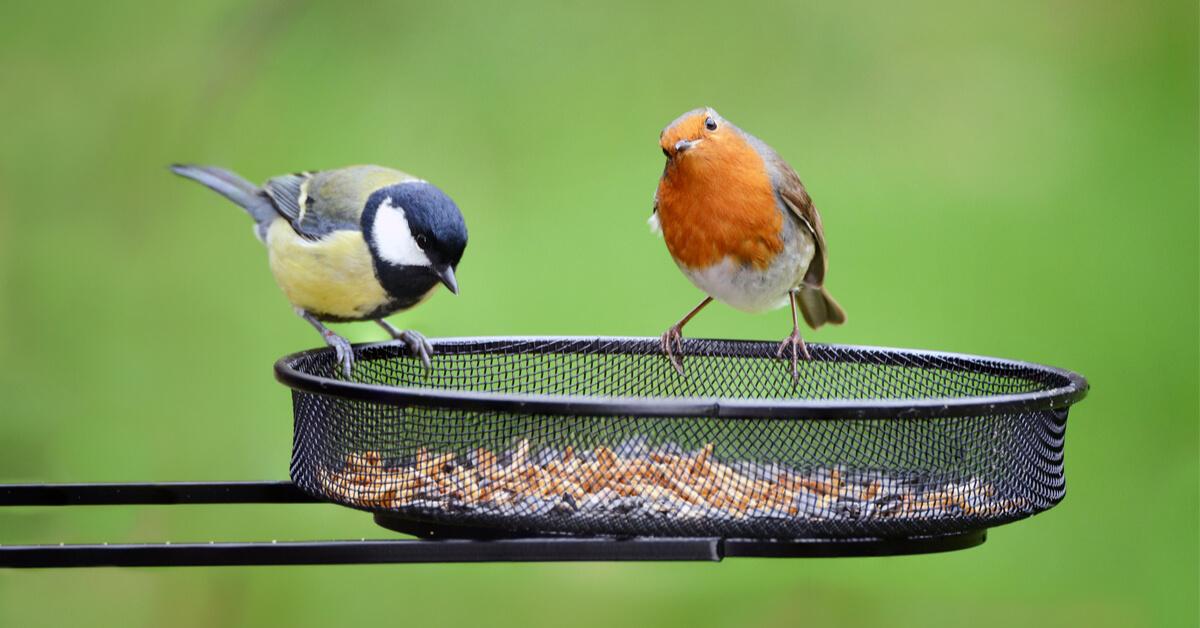 Les oiseaux de nos jardins, aussi utiles que beaux !