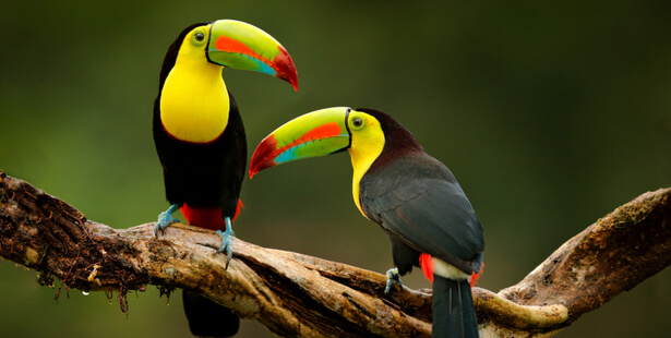 oiseaux sur terre