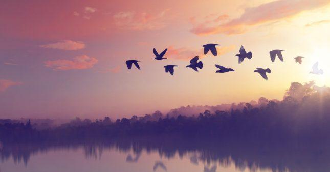 Connaissez-vous le nombre d'oiseaux sur terre?