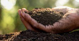 Quel terreau pour vos semis?