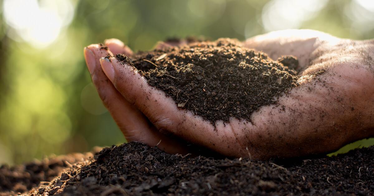 Quel terreau pour vos semis ?