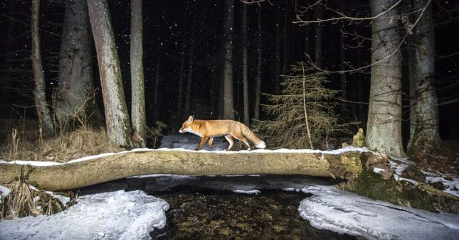 7 gagnants du concours World Nature Photography Awards 2020