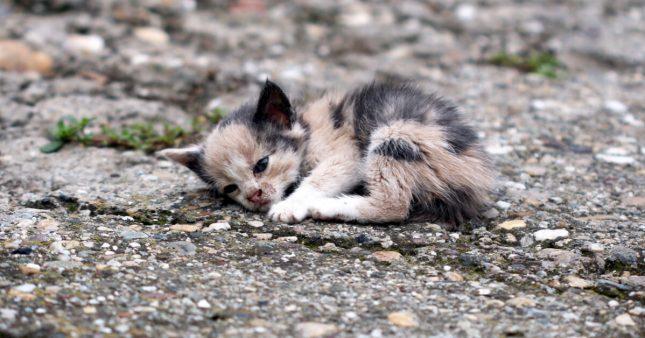 Les abandons de chats explosent en France – les euthanasies aussi.