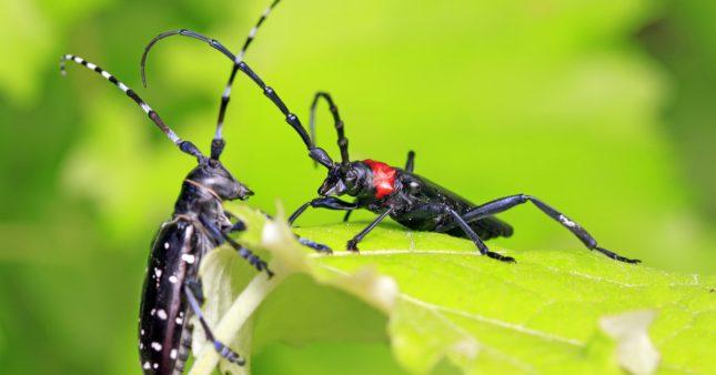 Aidez les scientifiques à traquer les espèces exotiques invasives grâce à AGIIR