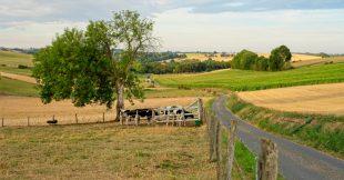 Une agriculture européenne bio et autosuffisante, c'est possible dit le CNRS