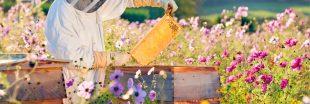 Protéger les abeilles des pesticides : la science avance